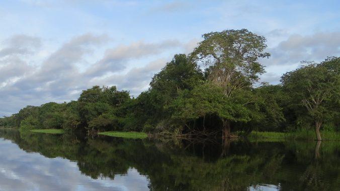 Pope Francis releases Apostolic Exhortation on 'Beloved Amazonia'