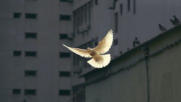 Advancing Nonviolence and Just Peace